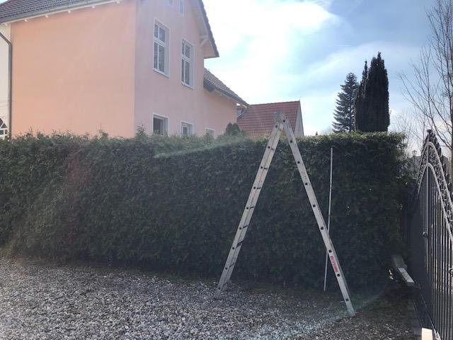 Verschnittene Hecke neu schneiden Gartenservice in Berlin