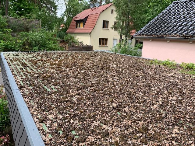 Gartenservice in Berlin Dachreinigung Entfernung von Laub und Moos