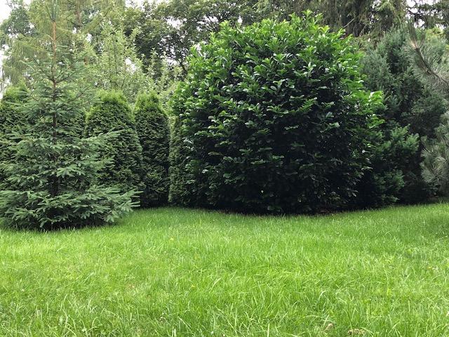 Garten mit gepflegten Bäumen - Gartenpflegeservice Berlin